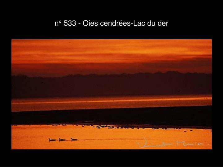 n° 533 - Oies cendrées-Lac du der
