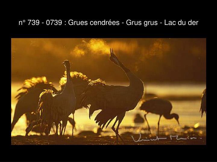 n° 739 - 0739 : Grues cendrées - Grus grus - Lac du der