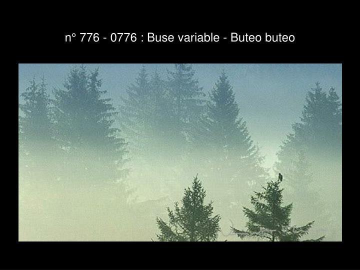 n° 776 - 0776 : Buse variable - Buteo buteo