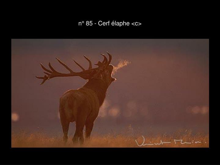 n° 85 - Cerf élaphe <c>