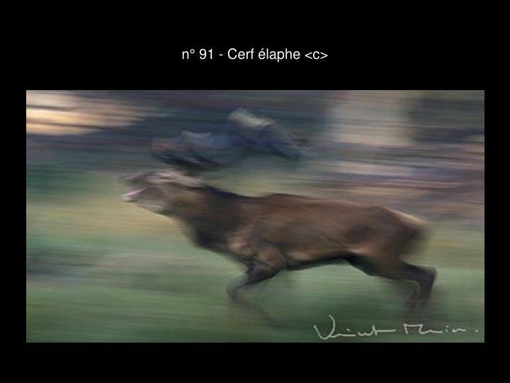 n° 91 - Cerf élaphe <c>
