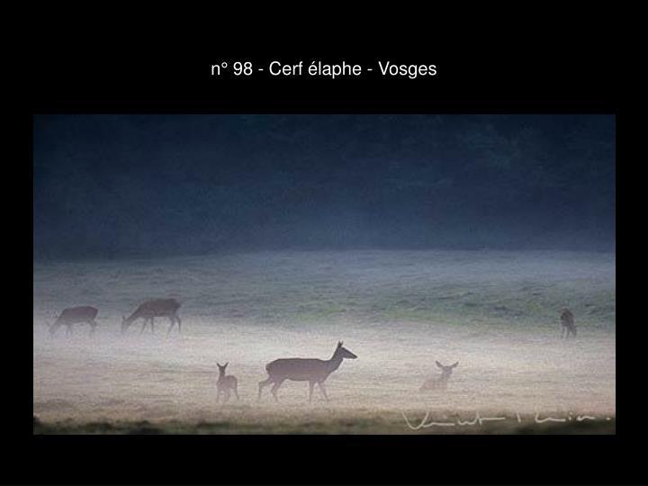n° 98 - Cerf élaphe - Vosges