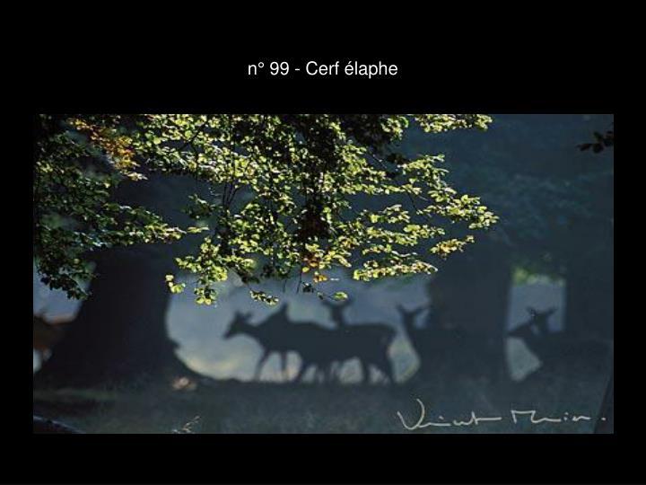 n° 99 - Cerf élaphe