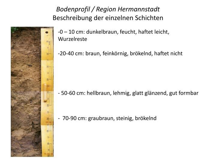 Bodenprofil / Region Hermannstadt