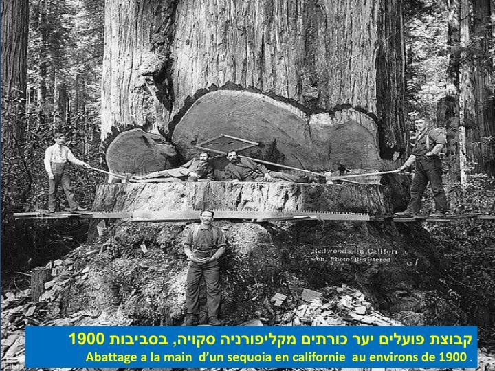 קבוצת פועלים יער כורתים מקליפורניה סקויה, בסביבות 1900