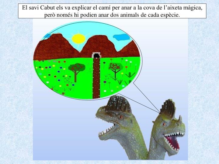 El savi Cabut els va explicar el camí per anar a la cova de l'aixeta màgica, però només hi podien anar dos animals de cada espècie.