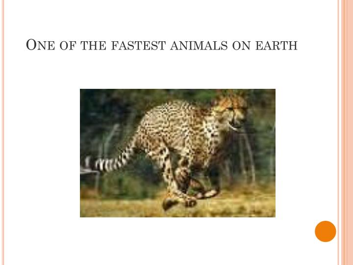 One of the fastest animals on earth