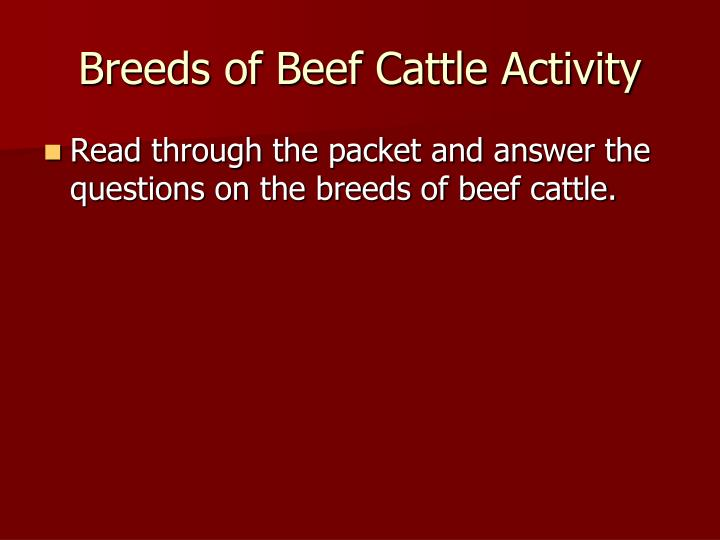 Breeds of Beef Cattle Activity