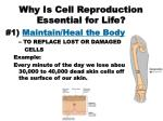 why is cell reproduction essential for life