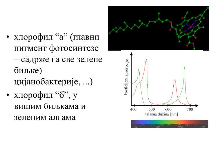 """хлорофил """"а"""" (главни пигмент фотосинтезе – садрже га све зелене биљке) цијанобактерије, ...)"""