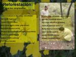 reforestaci n especies empleadas