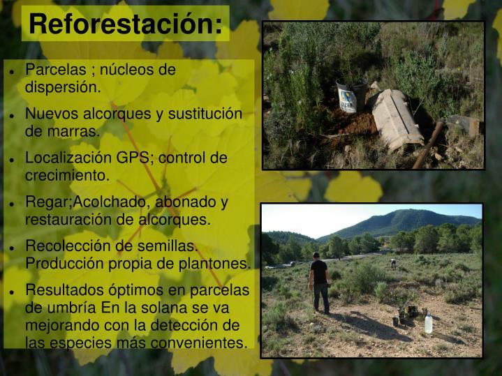 Reforestación:
