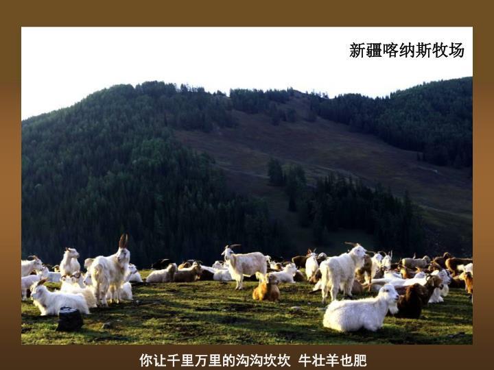 新疆喀纳斯牧场