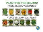plant for the season