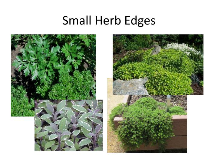 Small Herb Edges