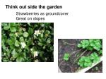 strawberries as groundcover great on slopes