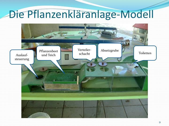 Die Pflanzenkläranlage-Modell