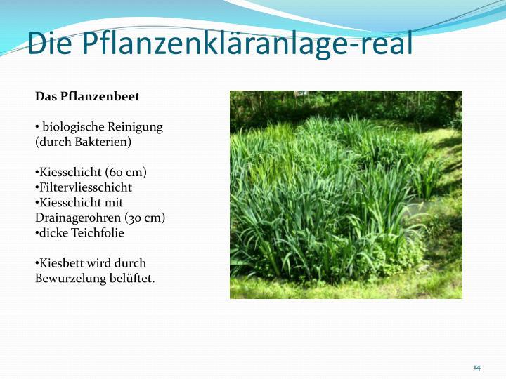 Die Pflanzenkläranlage-real