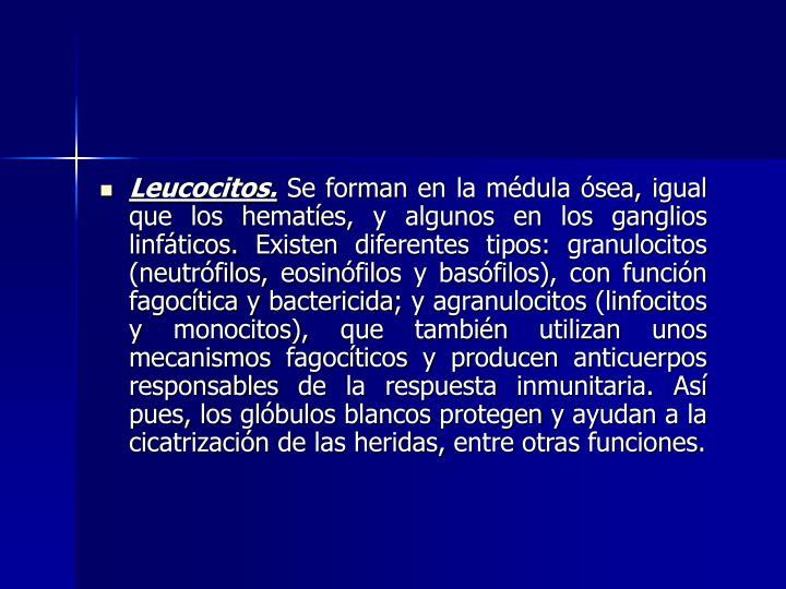 Leucocitos.