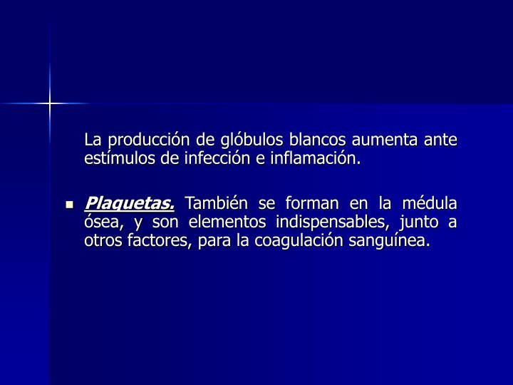La producción de glóbulos blancos aumenta ante estímulos de infección e inflamación.