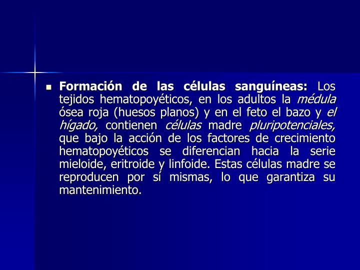 Formación de las células sanguíneas: