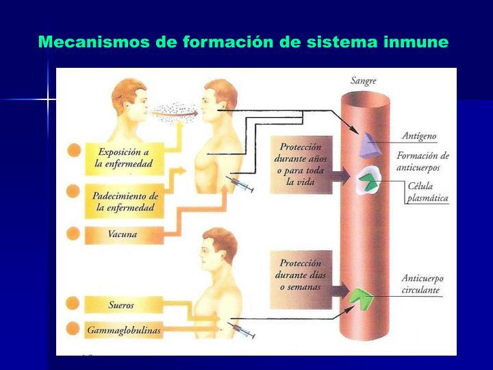 Mecanismos de formación de sistema inmune