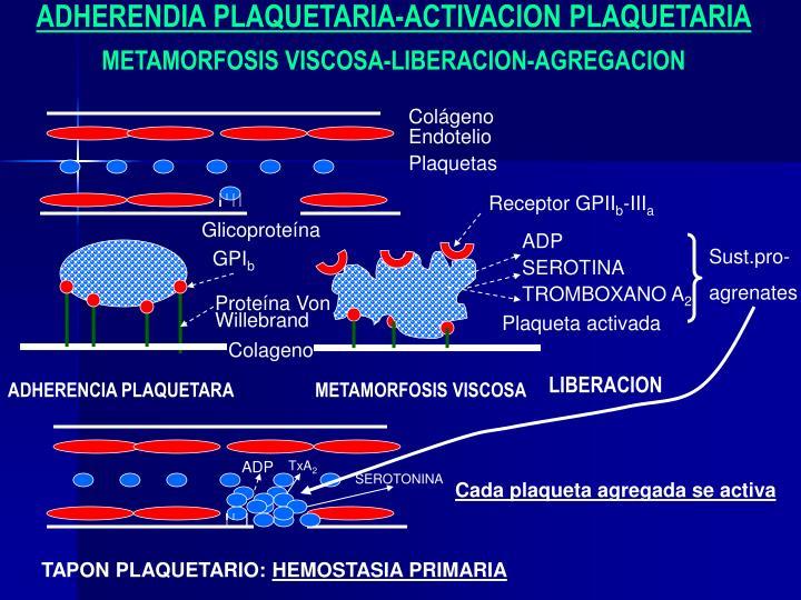 ADHERENDIA PLAQUETARIA-ACTIVACION PLAQUETARIA