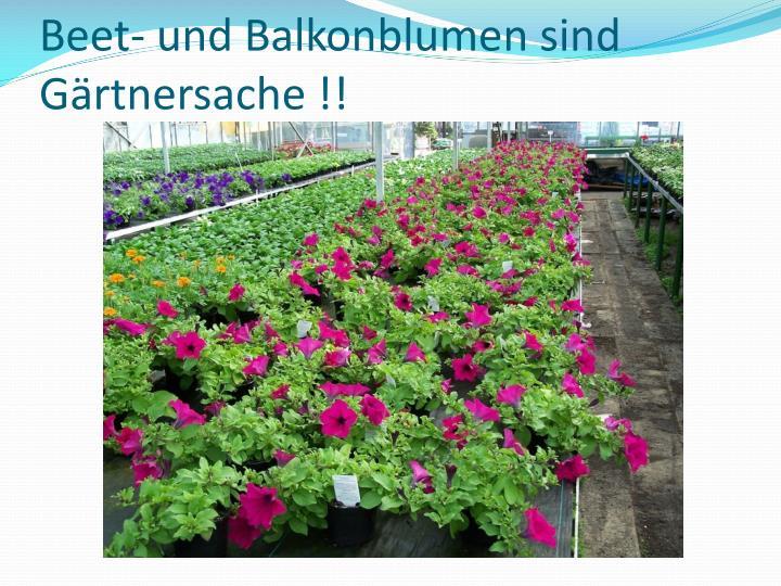 Beet- und Balkonblumen sind Gärtnersache !!