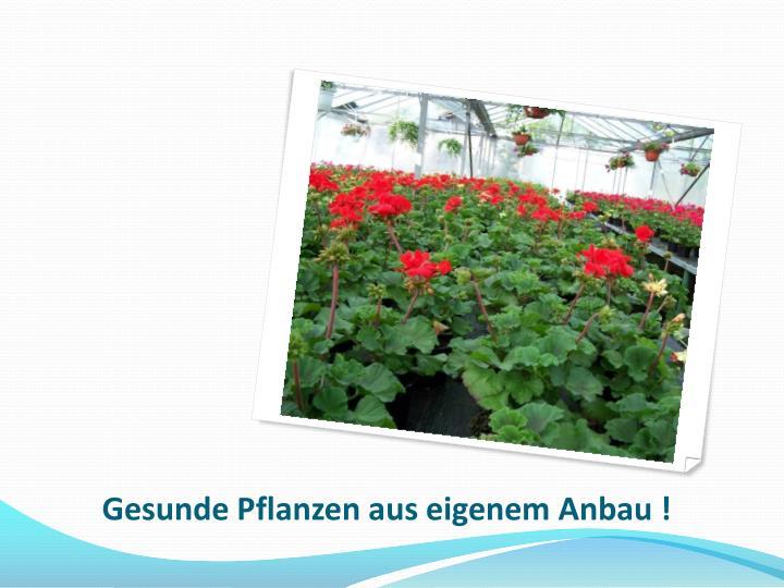 Gesunde Pflanzen aus eigenem Anbau !