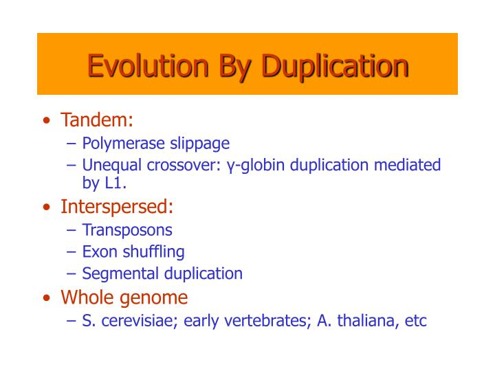 Evolution By Duplication