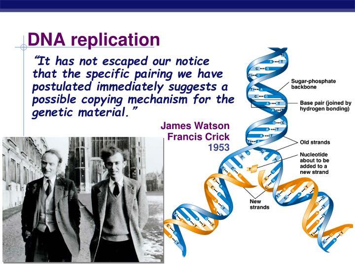 DNA replication