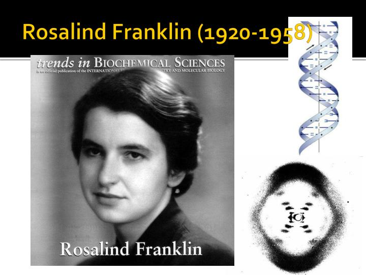 Rosalind Franklin (1920-1958)