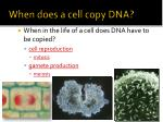when does a cell copy dna