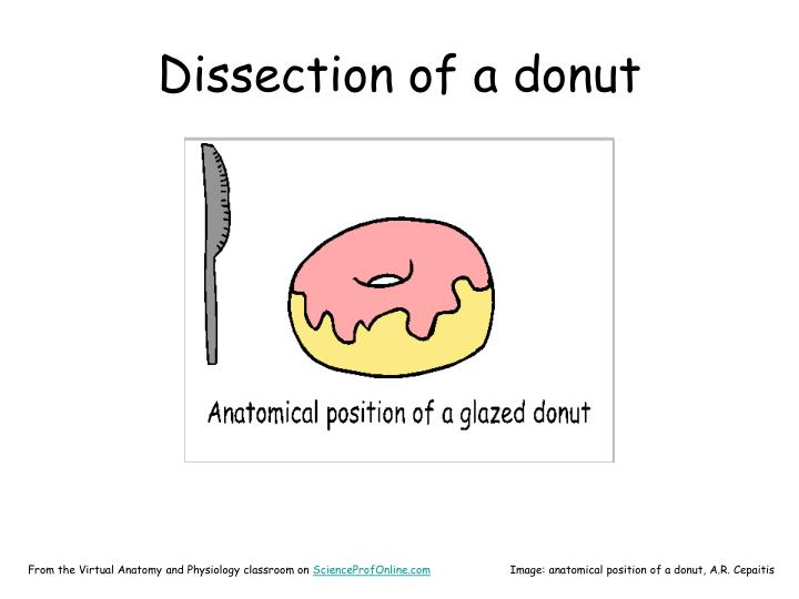 Dissection of a donut