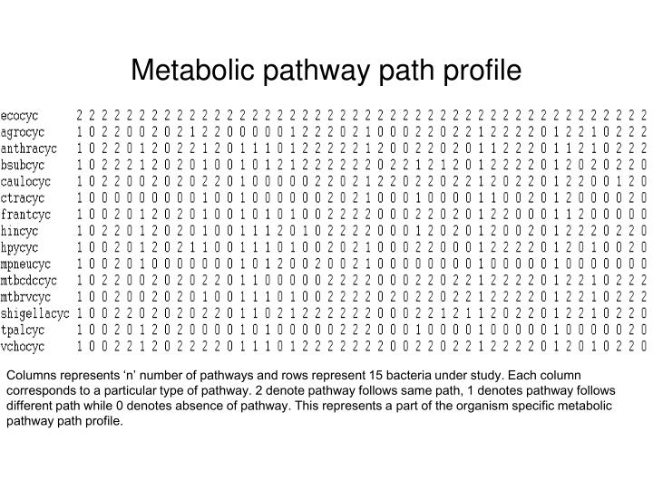 Metabolic pathway path profile