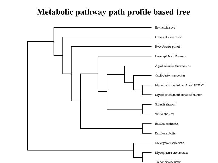 Metabolic pathway path profile based tree