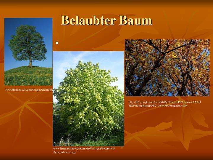 Belaubter Baum