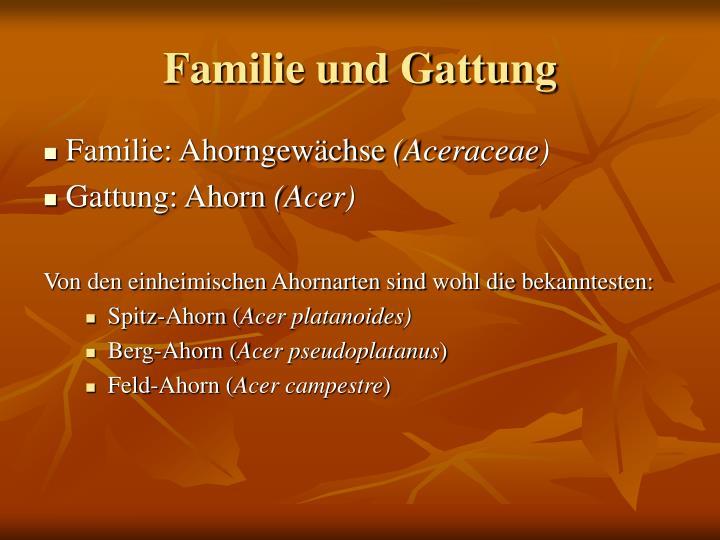 Familie und Gattung