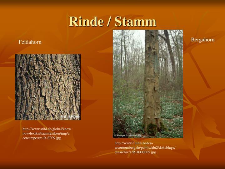 Rinde / Stamm