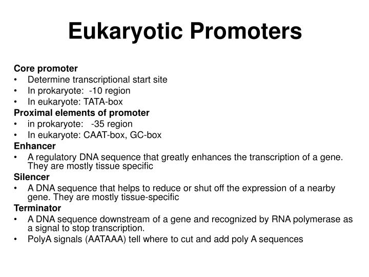 Eukaryotic Promoters