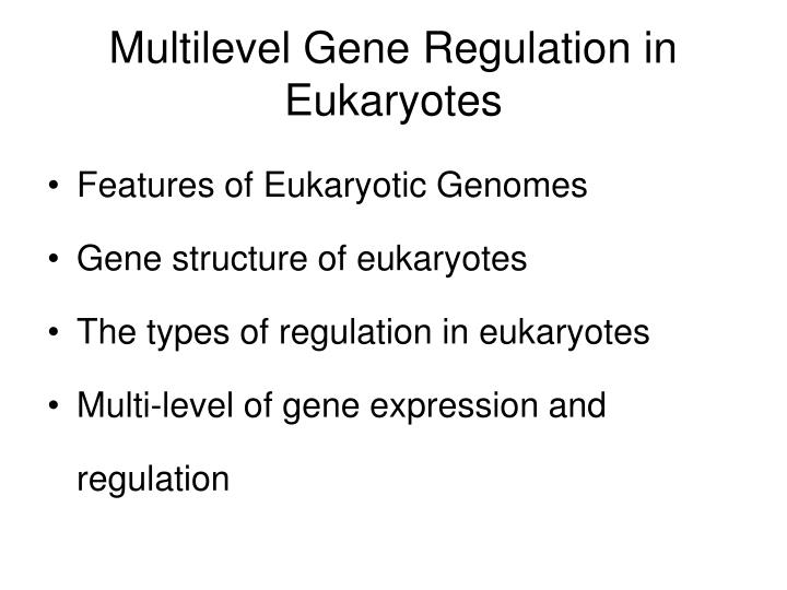 Multilevel Gene Regulation in Eukaryotes