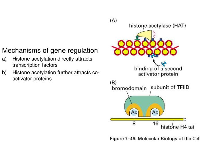 Mechanisms of gene regulation