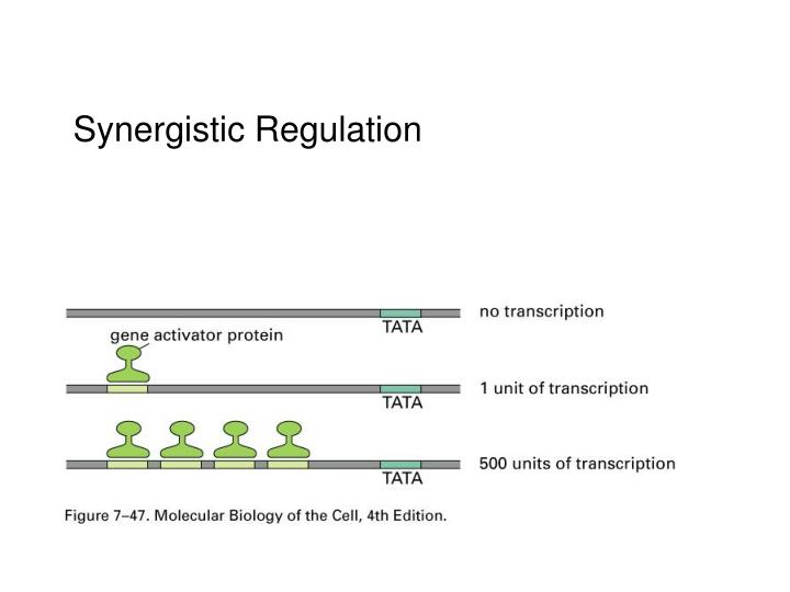 Synergistic Regulation