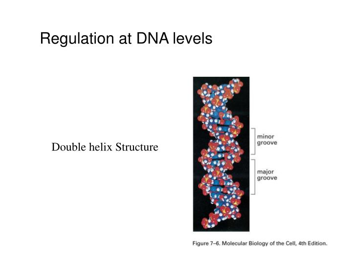Regulation at DNA levels