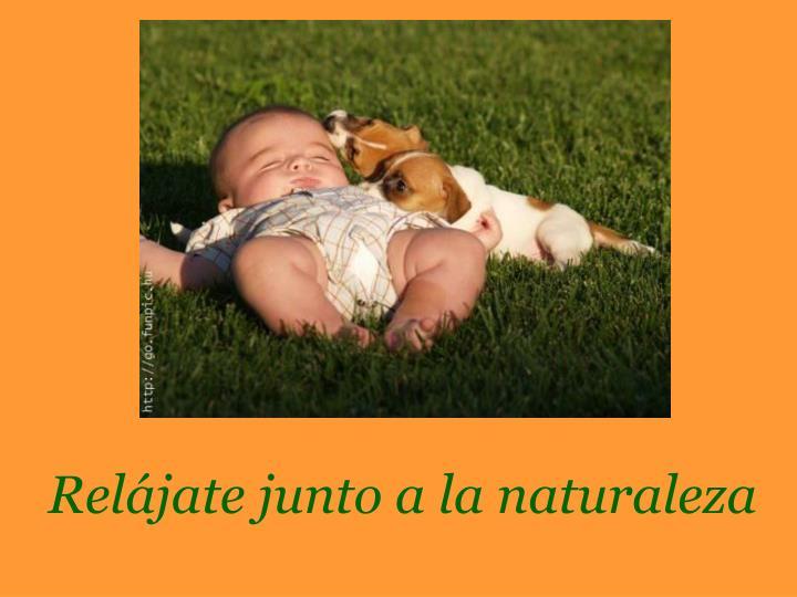 Relájate junto a la naturaleza