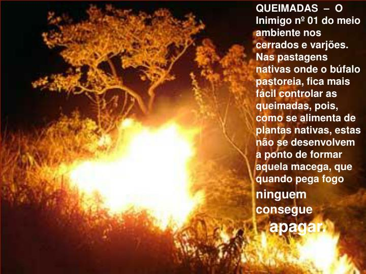 QUEIMADAS  –  O
