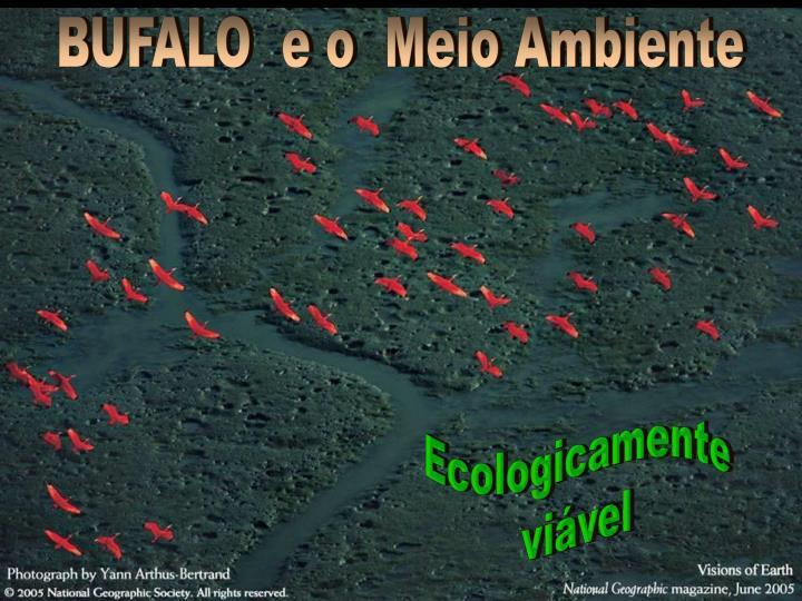 BUFALO  e o  Meio Ambiente
