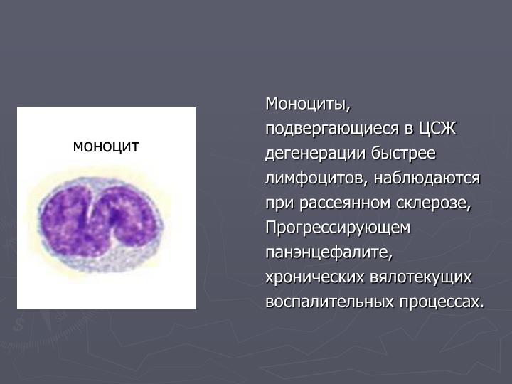 Моноциты,