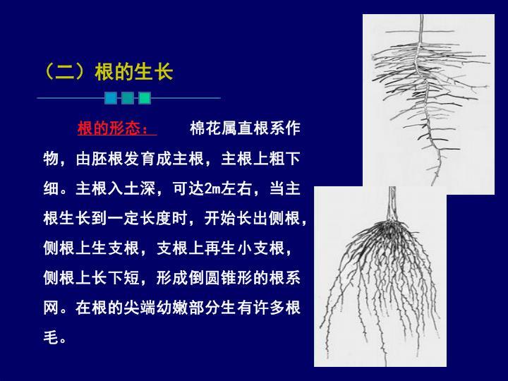 (二)根的生长