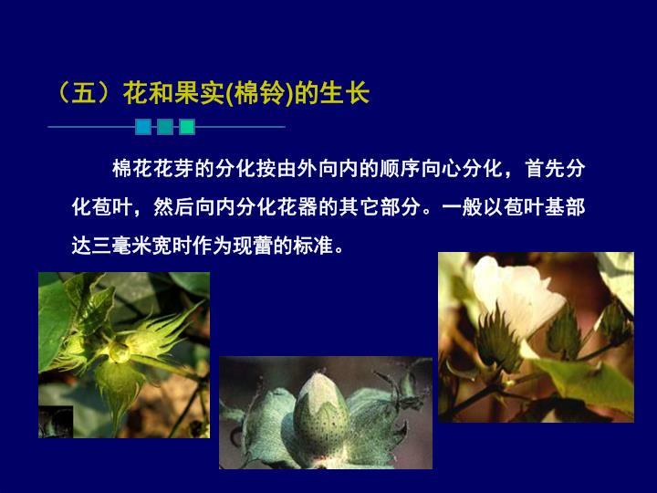 (五)花和果实